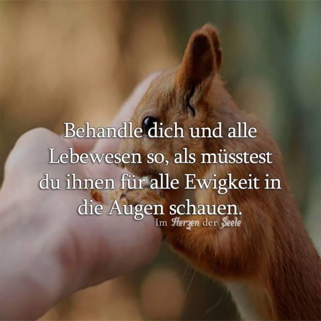 ahimsa deutsch