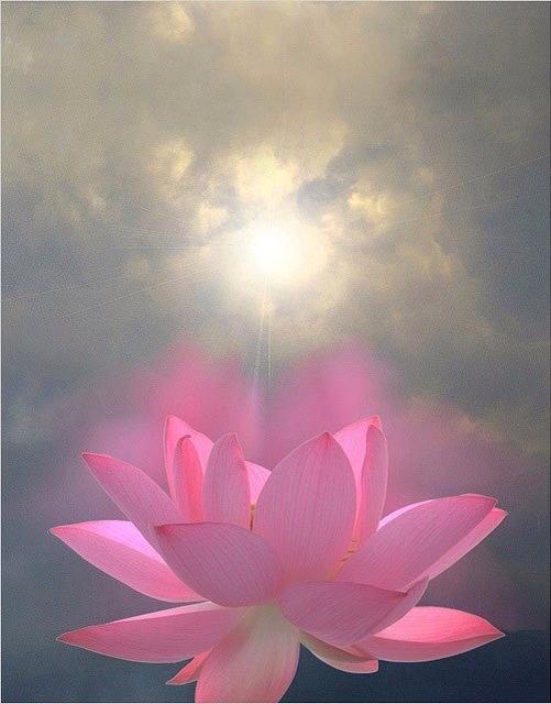KIRAN blossom