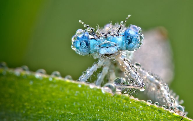 dragonfly_and_dew_drops