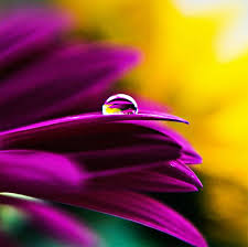 beauty dewdrop