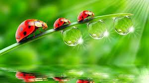 best wishes dewdrops