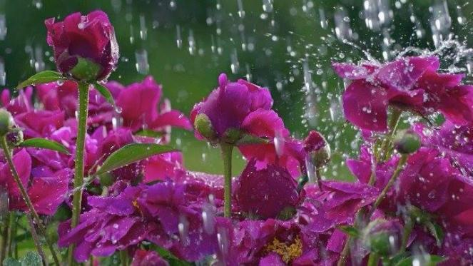 rainflower2