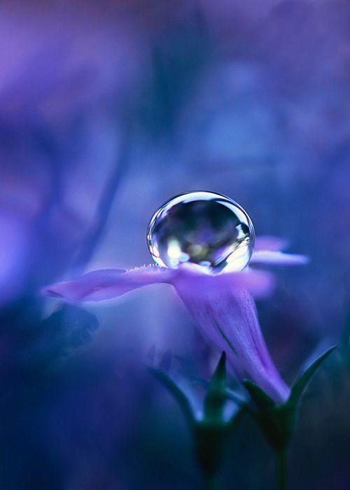 39b0ef43d9e93b722653da1e3de32181--dew-drops-rain-drops