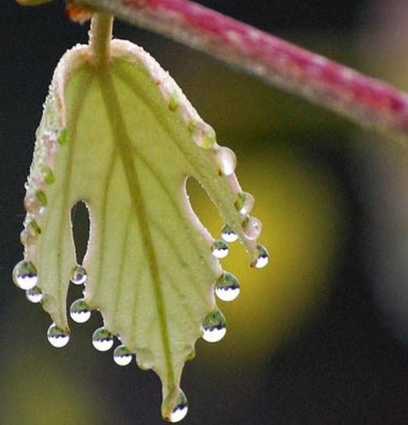 8b149d47c83094f12054e65bab2b1b49--dew-drops-rain-drops