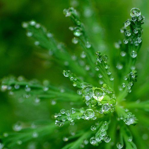 04018ad8c730d62a07a8afd90fa3a875--dew-drops-rain-drops