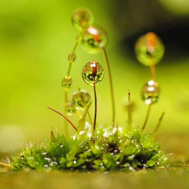 605bbcfd4f847e9f411e7c47b645d311--dew-drops-water-droplets