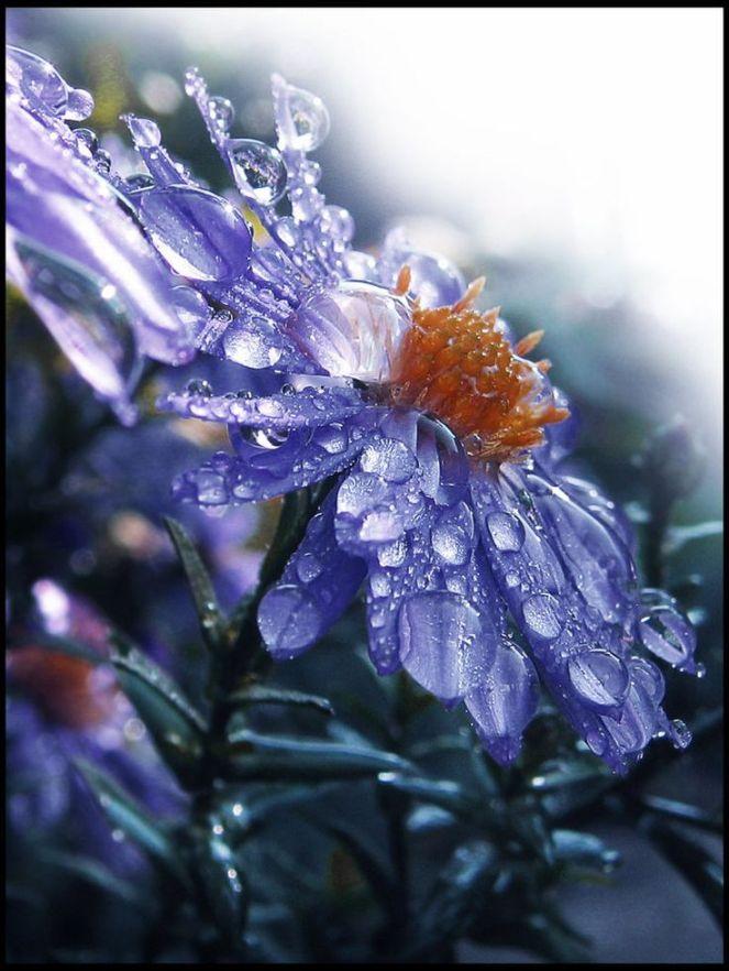 6427ca13f83d09dfb9572b29472b754c--rain-drops-dew-drops