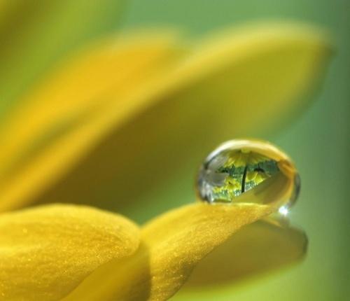 833c9abb4ecedc2083bc7c9a1e563395--dew-drops-rain-drops
