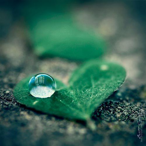 8ad62850088442d7e7a61c9aec080338--dew-drops-rain-drops