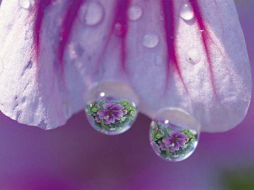 b93d291589fb5756749aef7091c3cb4c--dew-drops-rain-drops
