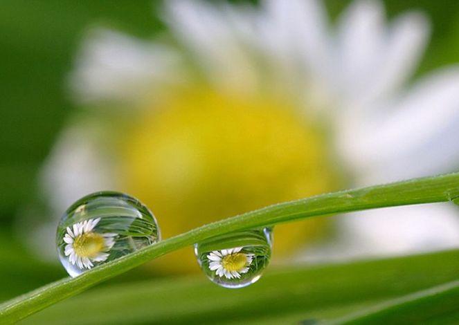 d91b130dad0b0d6a64a1add29db00dbd--dew-drops-rain-drops