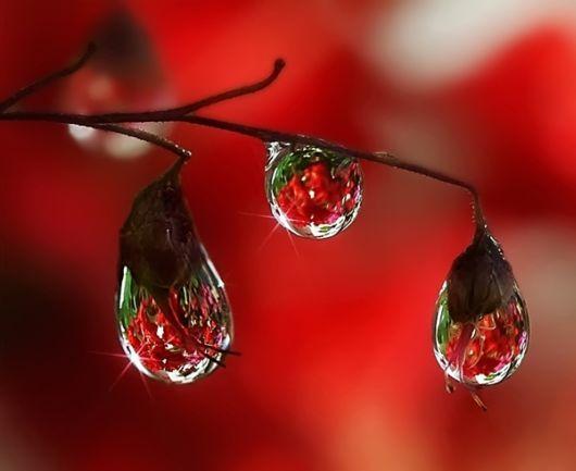 f5dc9dfd2ed6296bf2efb15c51735162--dew-drops-rain-drops