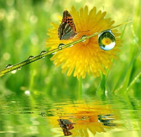 67816856b9b04e73334ce9b7aaa8d31c--dew-drops-rain-drops