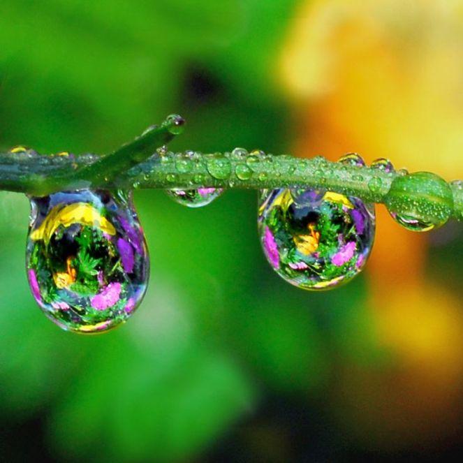 f1cd5754d3b36f3ffef892e72fd4bcf5--dew-drops-rain-drops