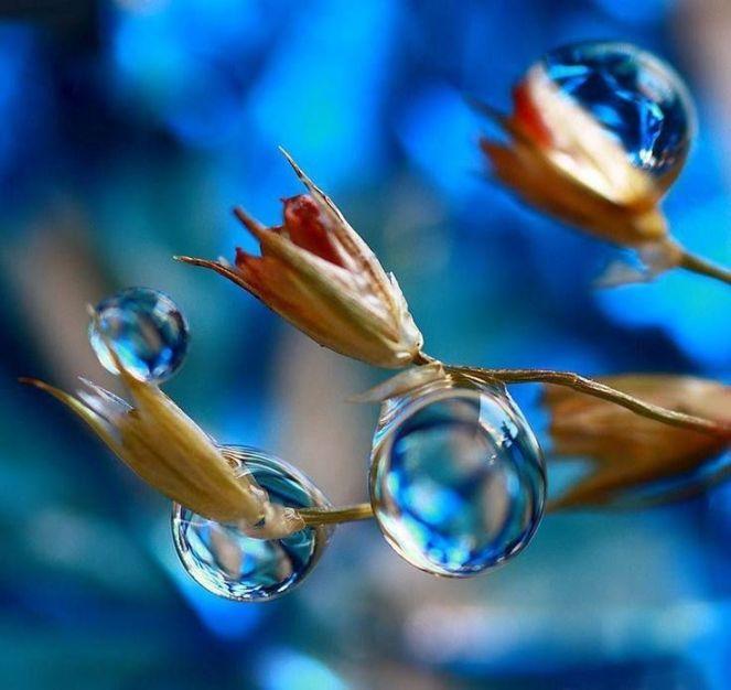 f1f922851ca594ea8a6ef9be75f3395d--dew-drops-rain-drops
