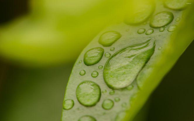 dew-drops-on-green-leaf-27444-2560x1600