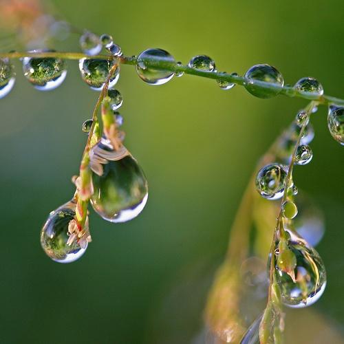 83aa252921b60a961c3a4530910da623--dew-drops-rain-drops