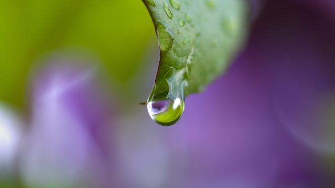 dew_drops_leaf_bending_49608_3840x2160