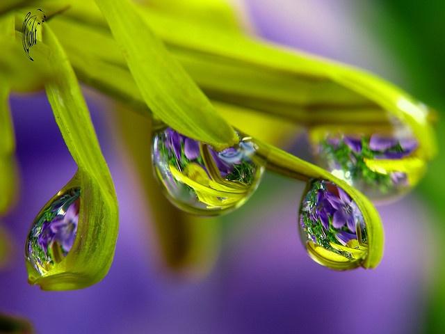e46aff67ff4eef87fec7733fd19a54dd--dew-drops-rain-drops
