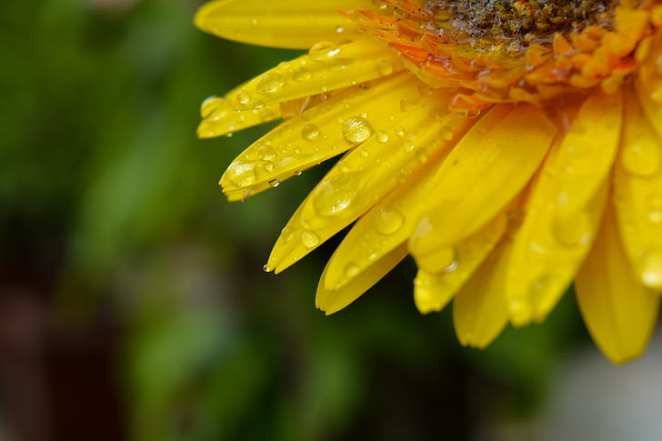 flower-macro-water-drop-on-flower-petal