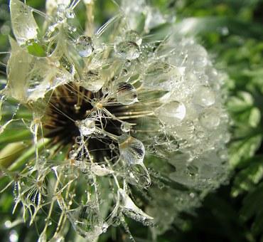 dew-drops-on-flower-210011__340