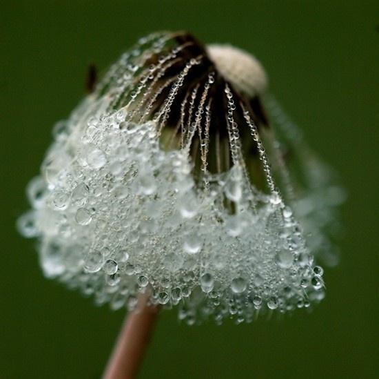 1d30f885b92dc3af0d9ade13a1e04f2e--rain-drops-dew-drops